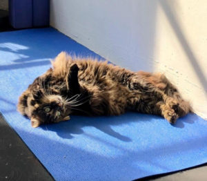 yoga cat sleeping in sunbeam